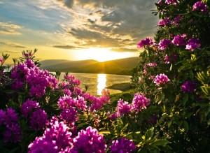 kwiaty-jezioro